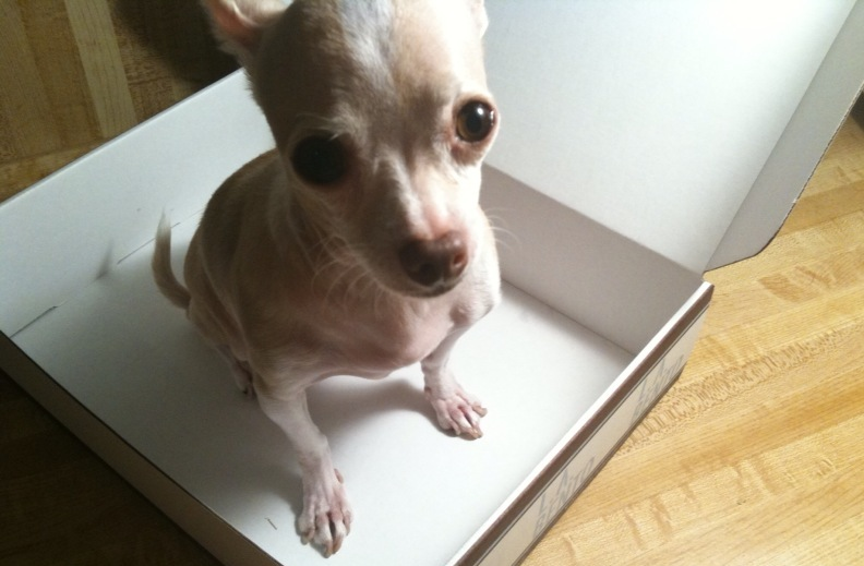 Chihuahua_TheDeliciousLife