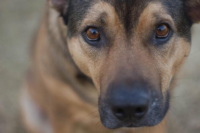 Dog_Elizabeth Tersigni
