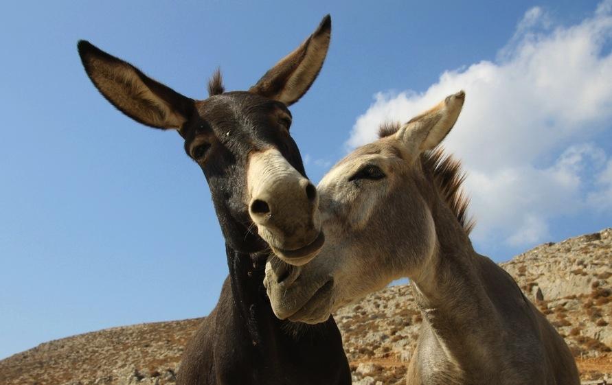 Donkeys_KlearchosKapoutsis